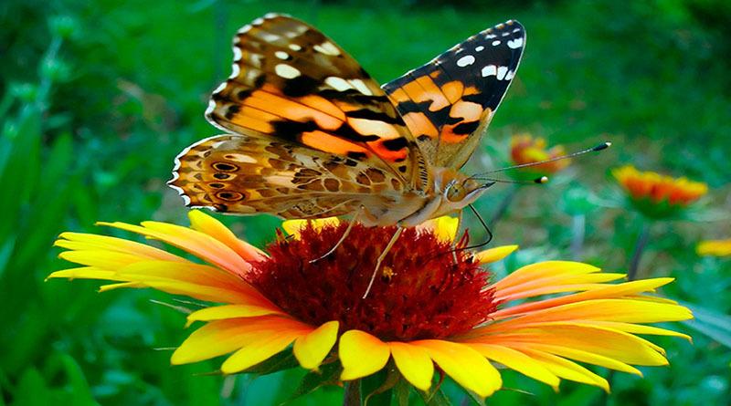 «Бабочки. Цветочное настроение.»