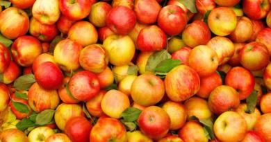 «Молодильное яблочко»