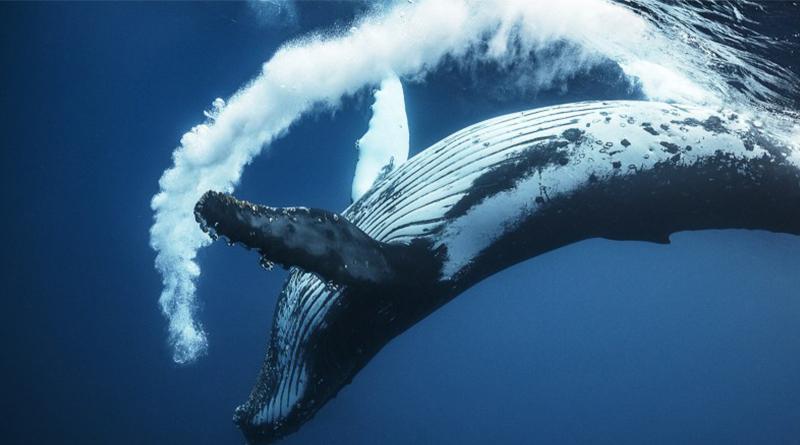 «Путешествие с морскими великанами»